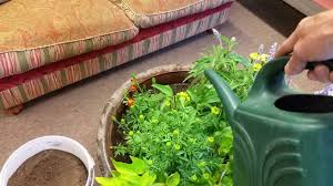 how to grow big in containers nevada gardening tips youtube