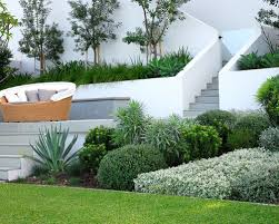 Backyard Privacy Trees Privacy Trees And Shrubs Modern Landscaping Ideas Houzz