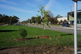 Maps Of Macomb County Michigan And Locals And Locations by Southern Macomb County Has Lost Its Trees Green Macomb Is Working