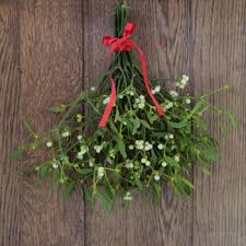 where to buy mistletoe merry mistletoe fragrance buy wholesale from bulk apothecary