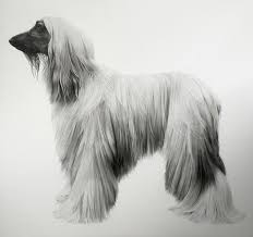 afghan hound urban dictionary hyperrealistic drawings of animals by jonathan delafield cook