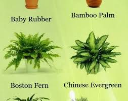 common house plants poisonous to cats 10 household plants that