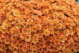 flowers plants fall color hgtv