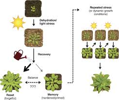 reconsidering plant memory intersections between stress recovery