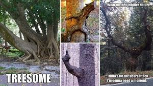 images showing some of nature s most unique trees