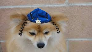 chanukah hat hanukkah hat for dog or cat leslie fregine can you make several of