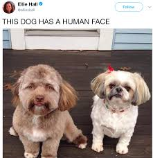 Puppy Face Meme - dog with a human face human faced dog know your meme