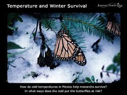 peak season at the monarch s winter sanctuary in mexico