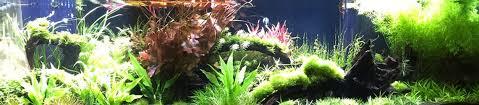 Aquascaping Plants Aquariumplants Com Live Plants For Aquariums U0026 Fish Tanks