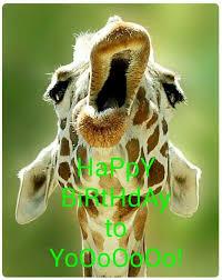 Giraffe Meme - happy birthday to yooooooo giraffe meme happy birthday memes