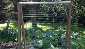 How To Grow Cucumbers On A Trellis Make A Cucumber Trellis Out Of Scrap Wood Hobby Farms