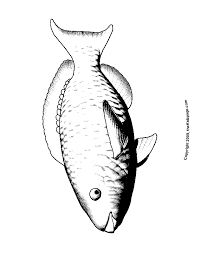 parrot fish free coloring pages for kids printable colouring sheets