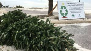 live christmas tree christmas tree recycling locations now open wlox the news