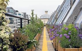 roof gardens blossom in london telegraph