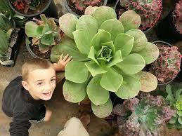 the succulents plants succulent nursery wedding succulents