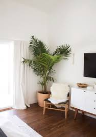 best indoor plants for air related to houseplants plants best