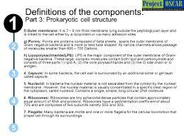 prokaryotes and eukaryotes ppt download