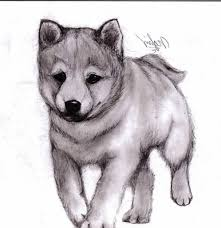easy pencil drawings of animals pencil drawing of animals pencil