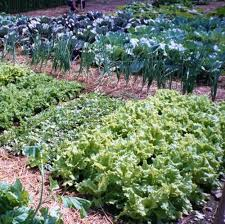 best 25 fall vegetable gardening ideas on pinterest winter