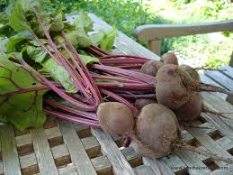 A Root Vegetable - how to grow harvest and eat root vegetables tenth acre farm