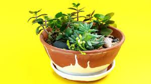 how to make a miniature succulent garden youtube