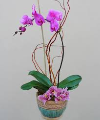 orchid plants delivery in los angeles ca french florist