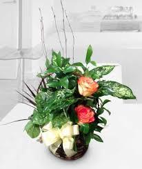 dish u0026 euro gardens akron oh house of plants florist