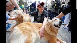Comfort Golden Retriever Breeders Furry Counselors Give Comfort In Orlando Cnn