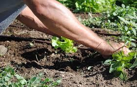 Urban Garden Denver - south grant community garden denver urban gardens