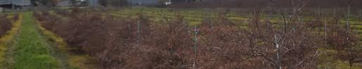 dsc 0762 premier trees