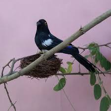 taxidermy home decor fake artificial magpie bird realistic taxidermy natural home decor
