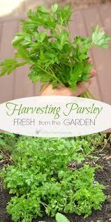1627 best get busy gardening images on pinterest gardening tips