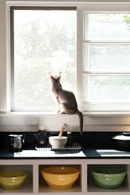 Cat Window Sill Perch 199 Best Design Cats Images On Pinterest Cats Animals And Kitty