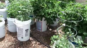 how to make a 5 gallon bucket garden youtube