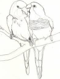 love birds pictures drawings