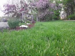 guide to organic lawn care