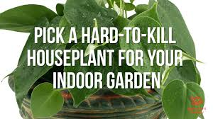 no sun plants best plants for indoors small indoor plants fabulous ideas of