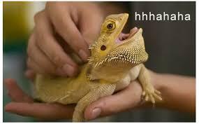 Lizard Meme - image 836625 laughing lizard hhhehehe know your meme