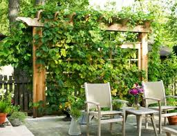 Landscaping Ideas For Backyard Privacy 15 Ways To Gain Privacy In Your Yard