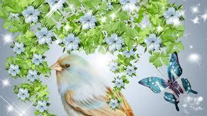 senery beautiful birds hd nature blue is bird butterfly firefox