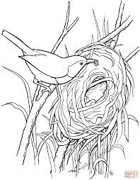 free coloring pages of birds free coloring pages birds lizard coloring pages robin bird