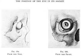 Anatomy Of A Cats Eye Sculpting The Eyes Beginner U0027s