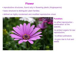 reproductive organs flower fruit seed ppt download