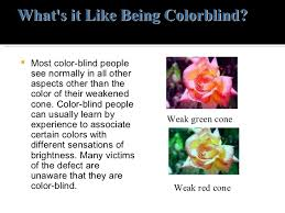 Colors That Color Blind Can See Color Blindness