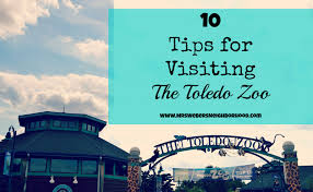 when does the lights at the toledo zoo start 10 tips for visiting the toledo zoo mrs weber s neighborhood