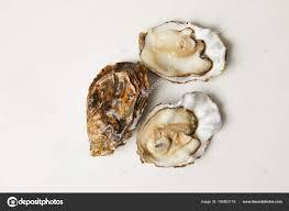 cuisiner des palourdes fraiches palourdes huîtres fraîches ouvertes isolés sur blanc photographie