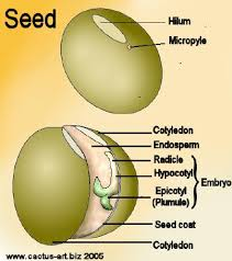 Parts Of A Tissue Forestry Learning The Parts Of A Seed
