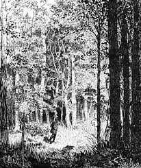 forest glade forest glade clipart etc