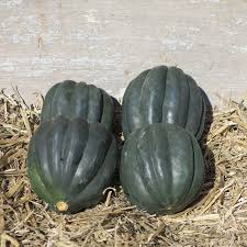 goose gourds available autumn ornamental pumpkins squash gourds