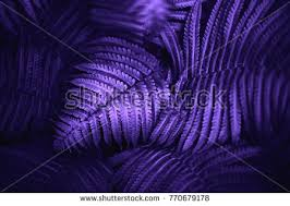 violet purple ultra violet stock images royalty free images vectors shutterstock
